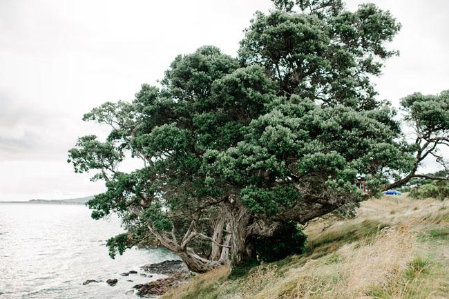 newzealand-elopement-09