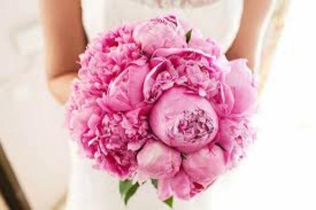 peonias rosas-5