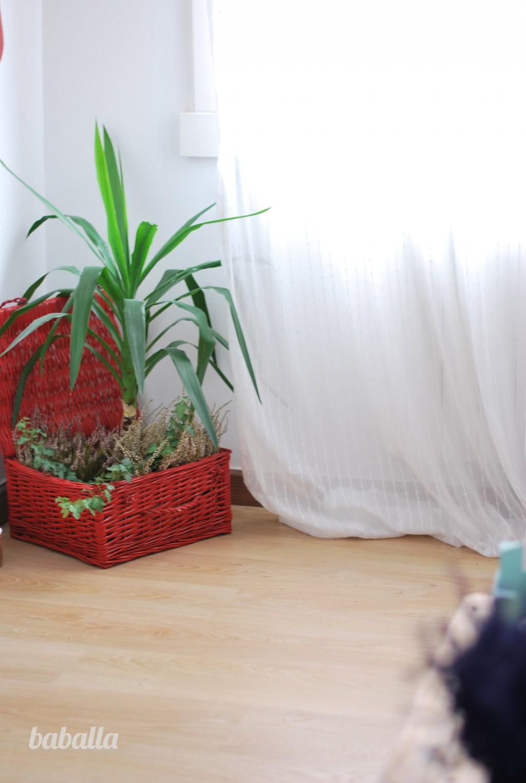 baballas_house_plants