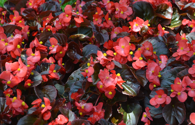flores resistentes chg