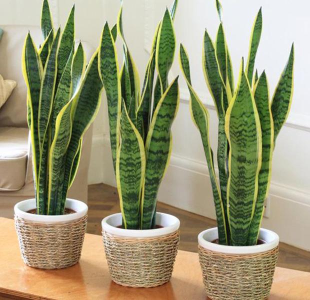 plantas de interior chg
