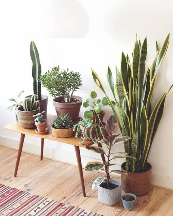 plantas-de-otono-interior
