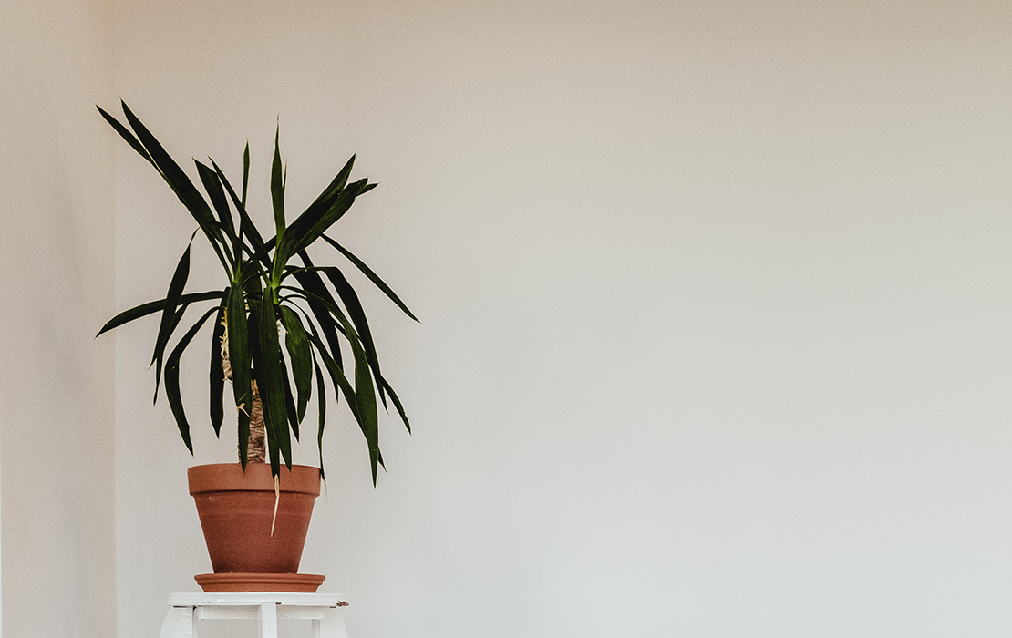Ideas para decorar antes de alquilar un piso