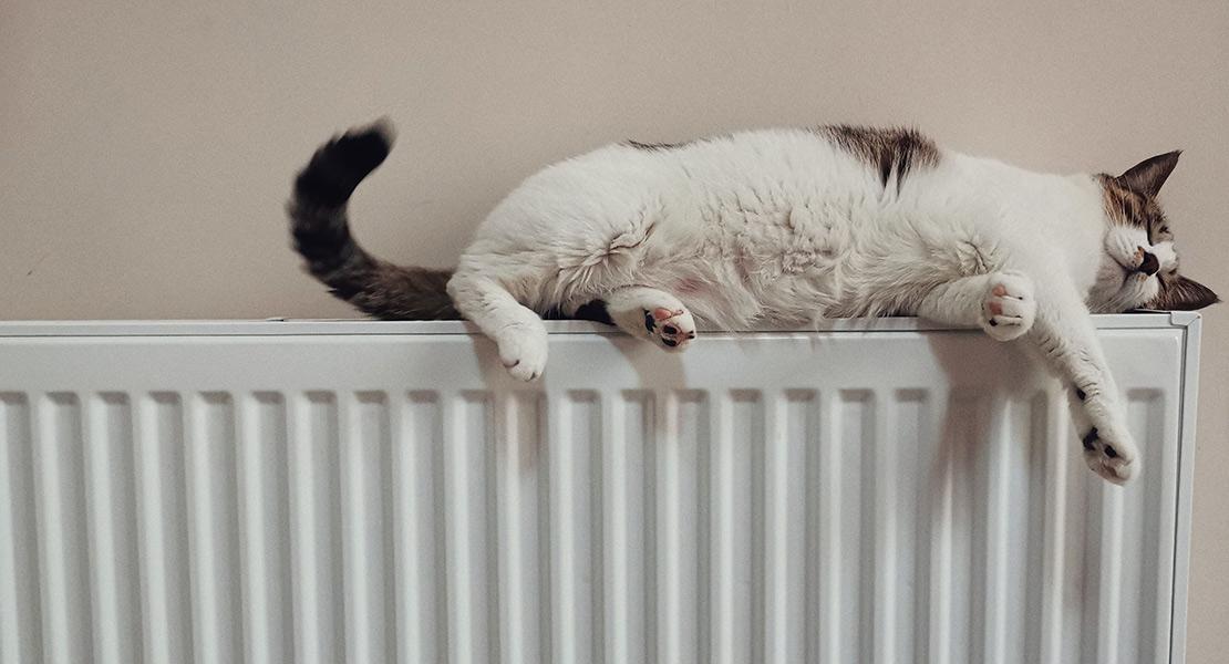 Disminuir gasto energético