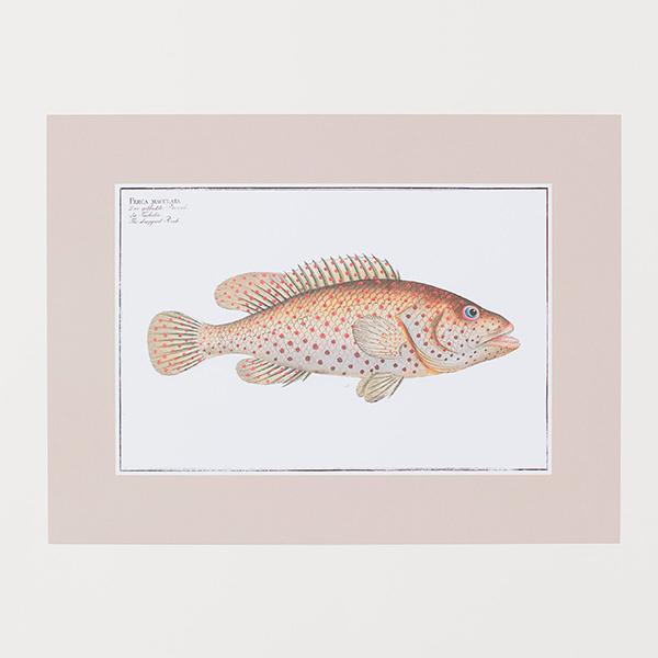Lámina de pez