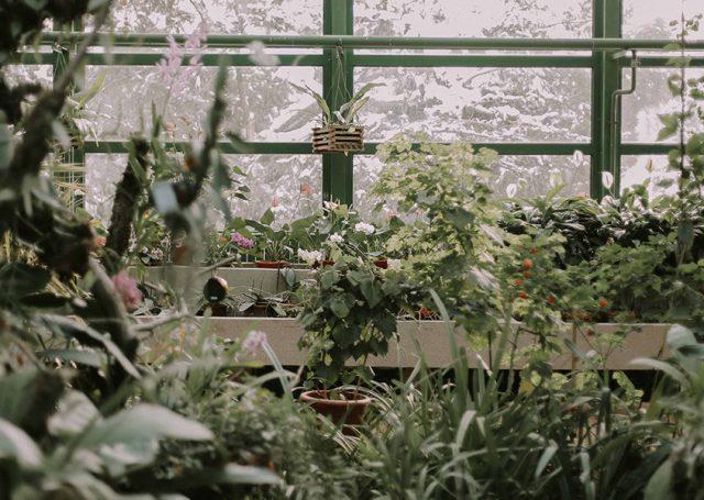 Cómo cuidar tu jardín: lo que debes saber antes de ponerte a ello