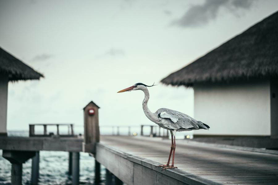 Off Shoulder Dress vestido blanco ibicenco Highly Preppy Maldivas Velassaru Islan Maldives Crimenes de la Moda