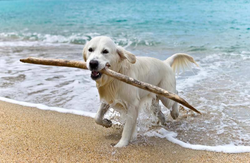 Las 10 mejores playas para ir con perros en España