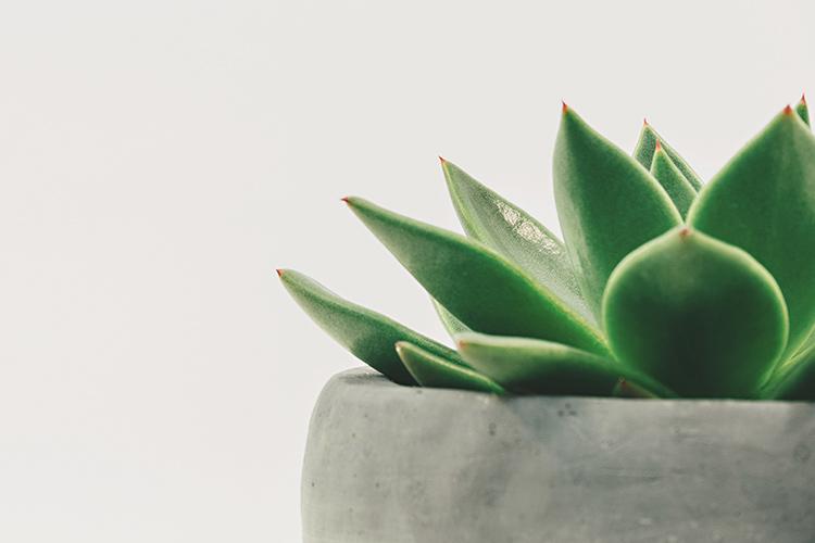 Todo lo que el gel de Aloe puede hacer por ti-185-asos