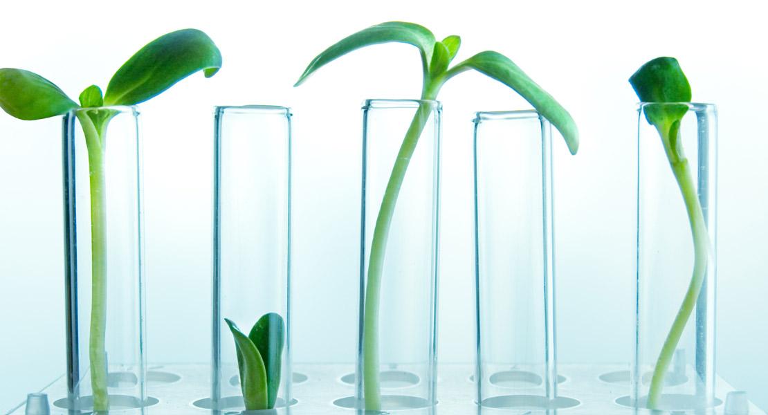 plantas y tubos de ensayo