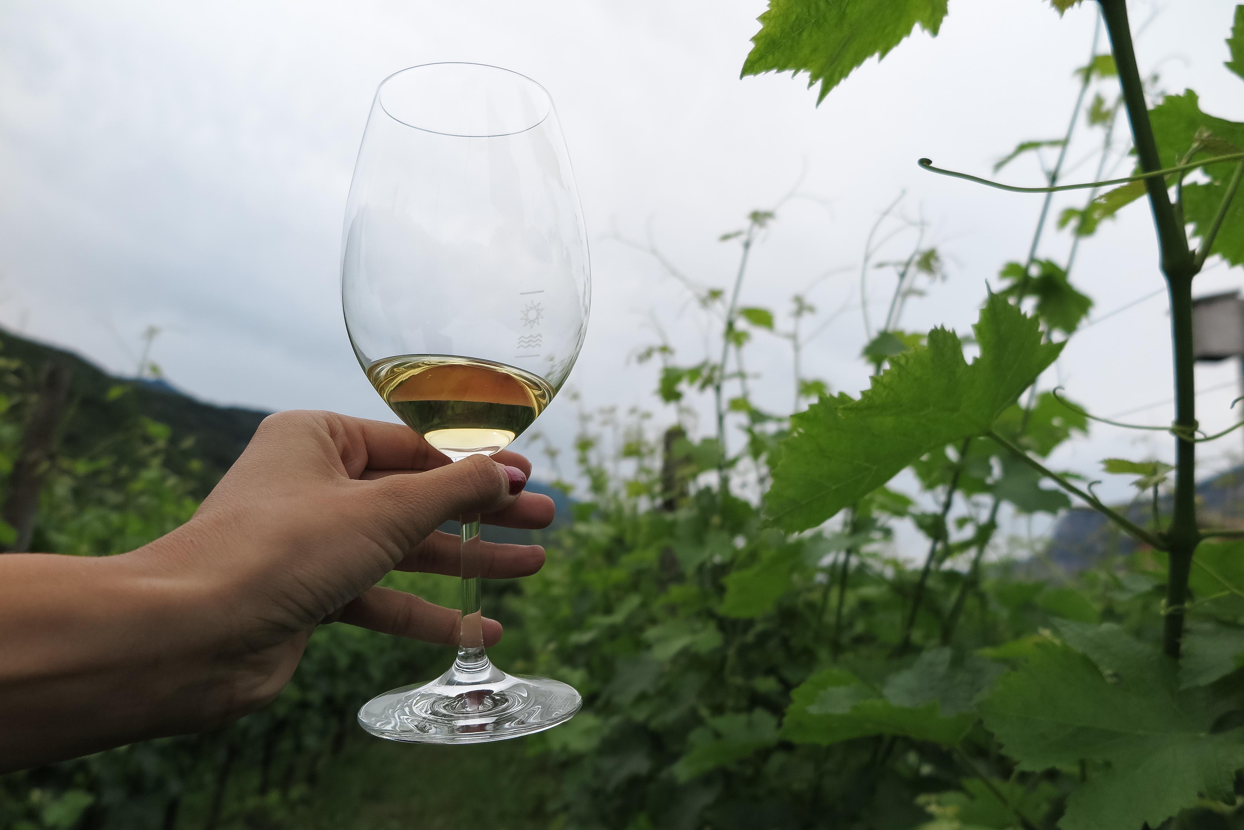 vino, vino italiana, italian whine, vino blanco, gino pedrotti azienda agricola, italia, trentino, expo riva schuh 86, cristina blanco, guiadeestilo