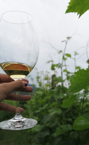 GINO PEDROTTI - Descubriendo los vinos italianos