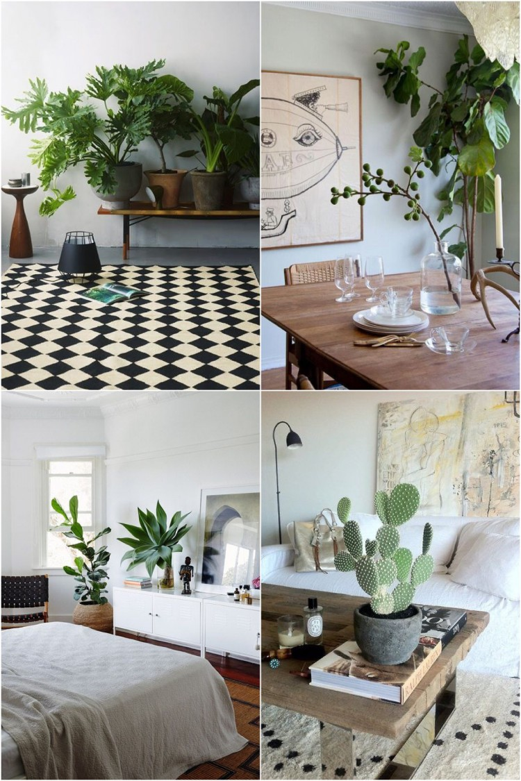 Decoaddict plantas de interior decoaddict lady addict for Plantas verticales de interior