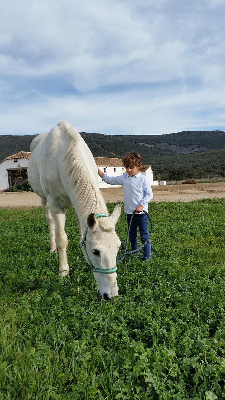 mamatrendy-caballos-jaimolas