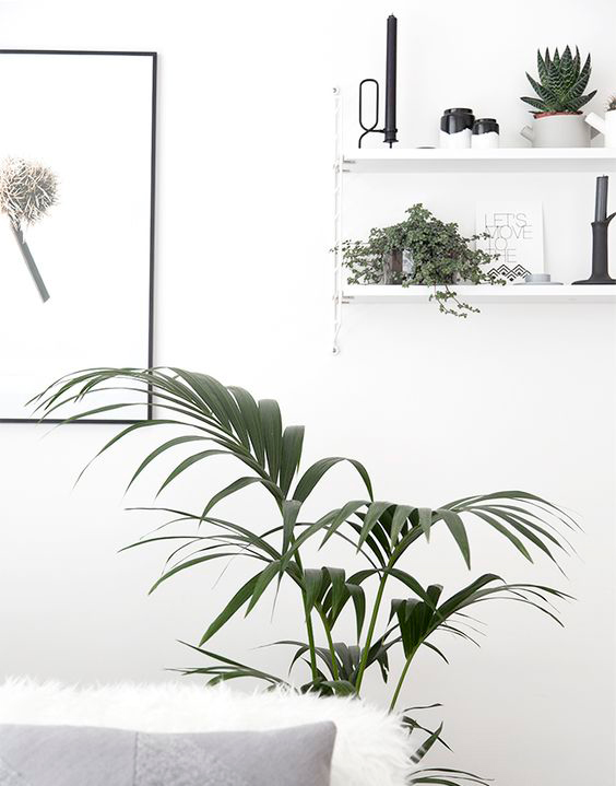 decoracion-plantas-de-interior-mamatrendy