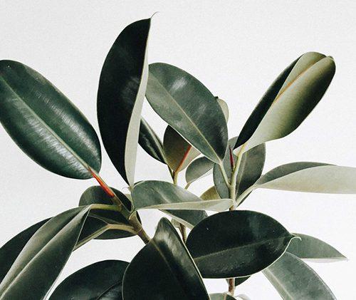Decoración con plantas – Mamá Trendy