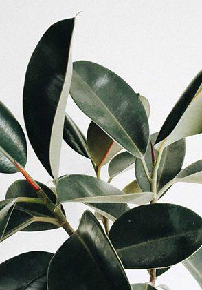 Decoración con plantas - Mamá Trendy