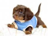 Los perros más cariñosos-25-martasanchez13