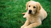 Los perros menos agresivos-54-martasanchez13