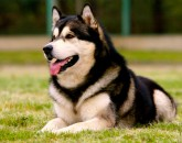 Por qué ladran los perros-63-martasanchez13