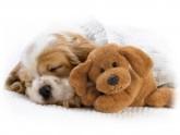 Por qué los perros duermen tanto-5-martasanchez13