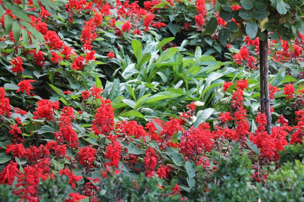 Mini dress red 001 [Máximo Ancho 1024 Máxima Altura 768]