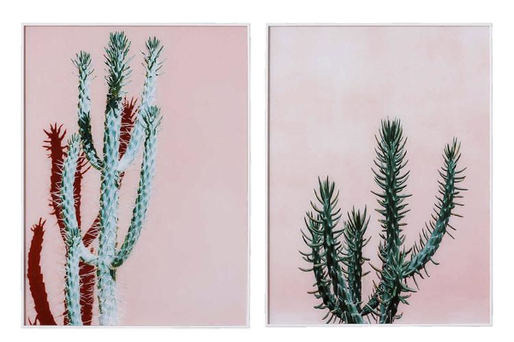 Descuentos redecora con estilo. Cuadros de cactus