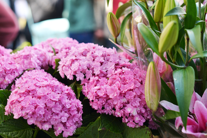 flowers pink
