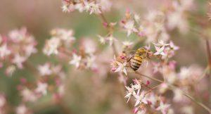 Todo lo que tienes que saber sobre la alergia primaveral