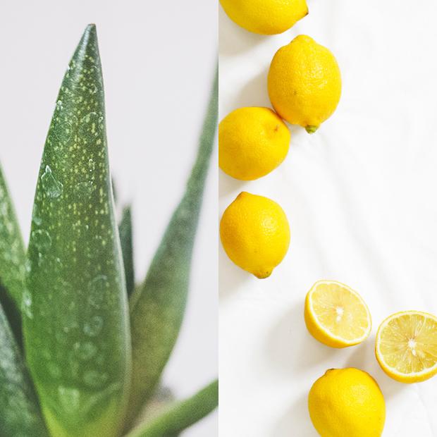 mascarillas caseras para el pelo Aloe con limón