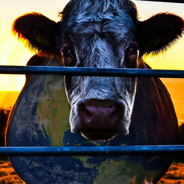 mejores documentales de netflix Cowspiracy