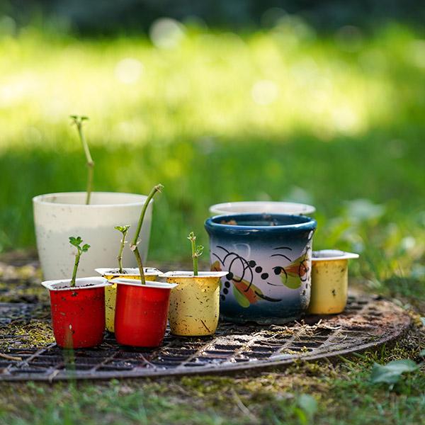 Juegos para hacer en casa con niños: Plantar lentejas