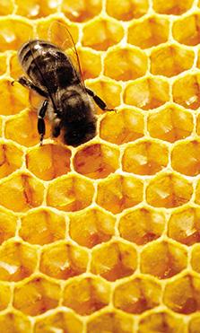 ¿Sabías que las abejas tiene un papel fundamental en nuestro planeta?