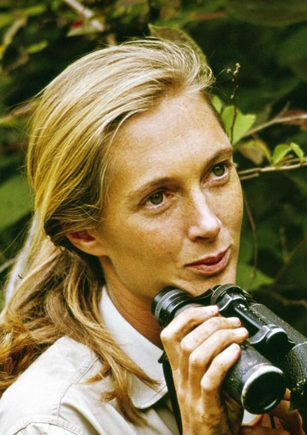 Documentales de netflix motivadores Jane Goodall