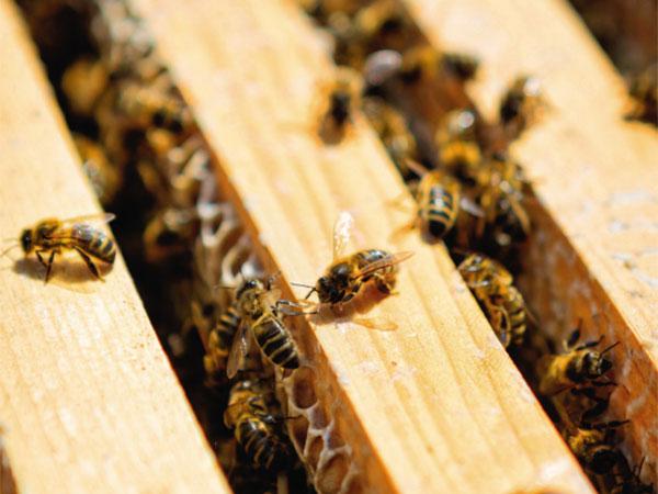 © Guerlain abejas compromiso belleza natural
