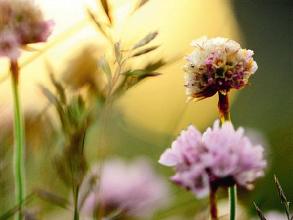 © Guerlain belleza natural