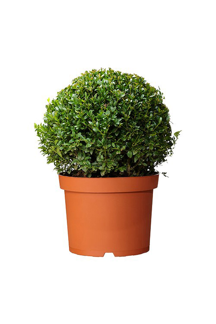 Terrazas decoraci n de verano stylelovely - Plantas ikea naturales ...