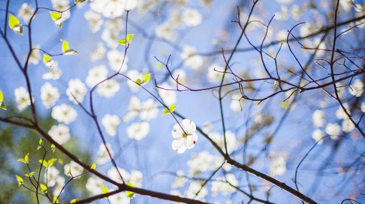 Perfumes primaverales para el otoño