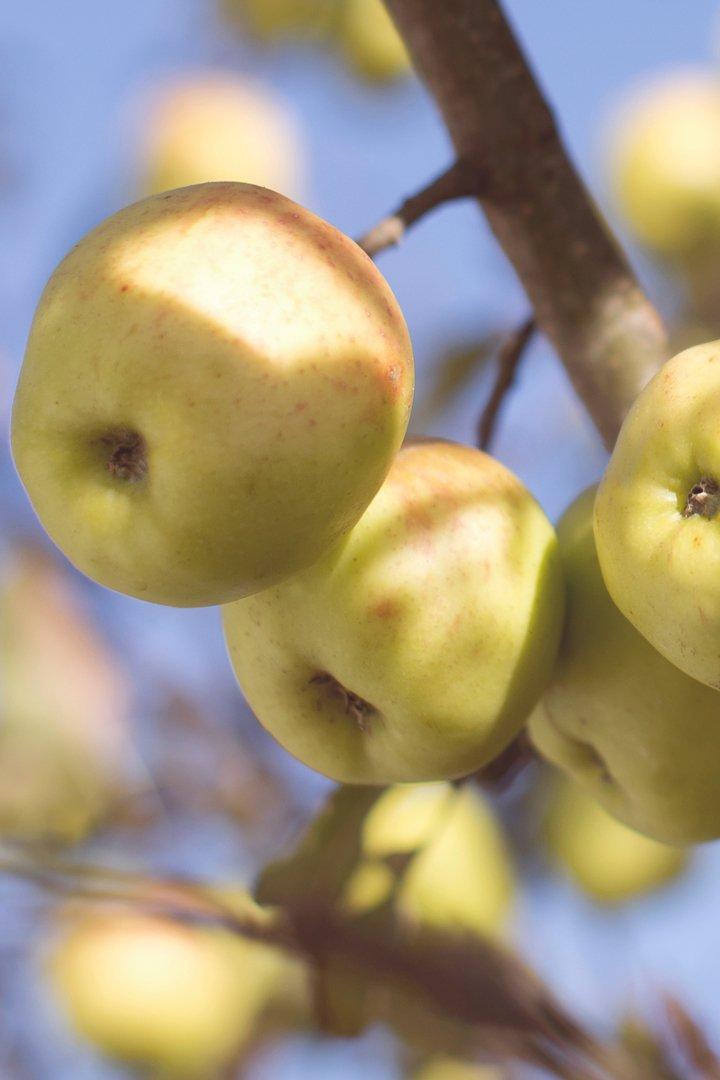 Manzana: snacks sanos