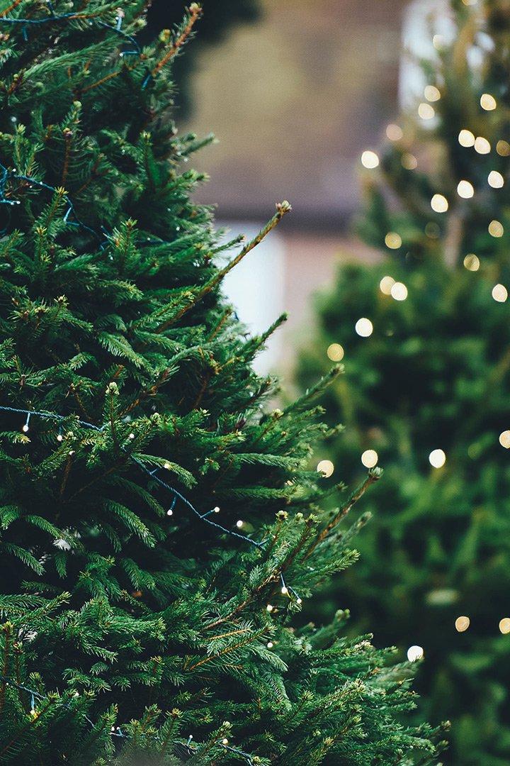 comprar árbol de navidad planes para el puente de diciembre