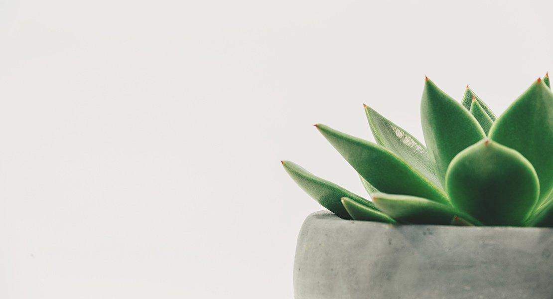 Todo lo que el gel de Aloe puede hacer por ti
