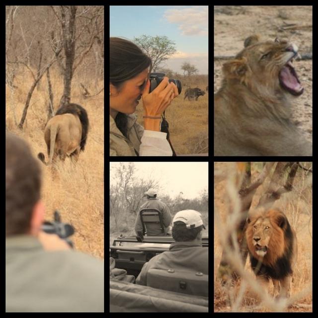 viaje sudáfrica fotos safari