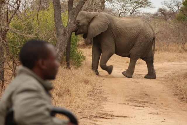 safari africa elefante