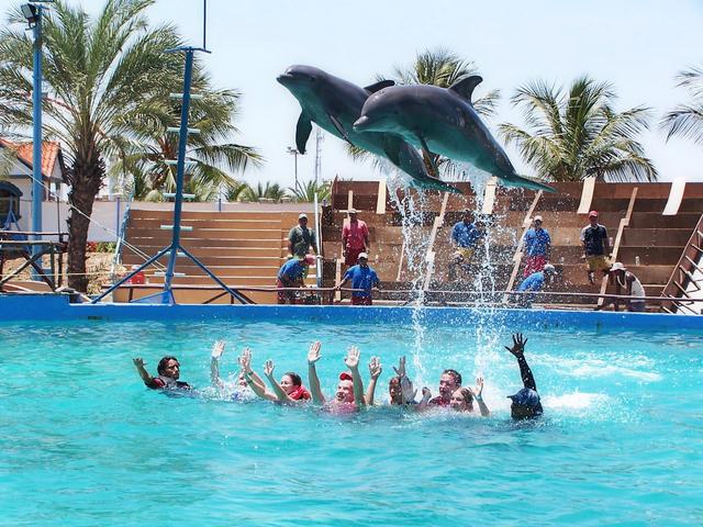 Nadar con delfines en espa a zoomarine portugal mamas - Banarse con delfines portugal ...