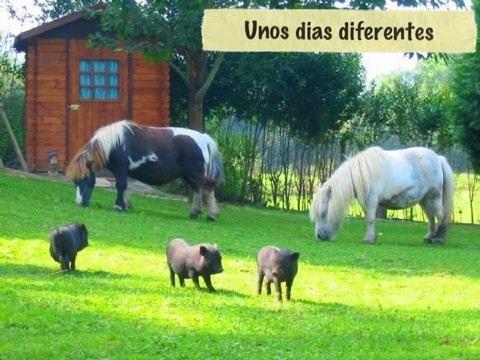 Vacaciones con niños pequeños: En la granja!!!-3754-joanasaldon