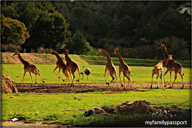 Viajar con niños: reserva de animales-6559-joanasaldon