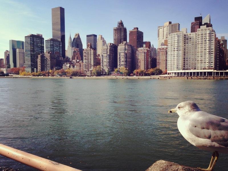 Nueva York con niños-7692-joanasaldon