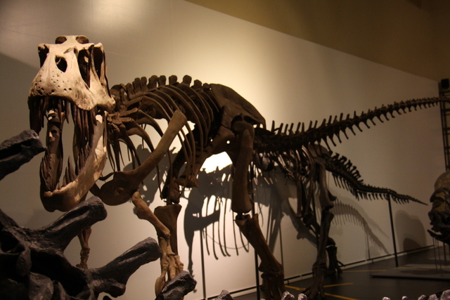 Museos para niños: Museo Ciencias Naturales de Madrid-9458-joanasaldon