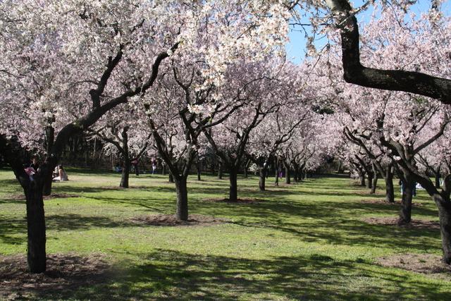 Planes gratis en Madrid: Quinta de los Molinos-8363-joanasaldon