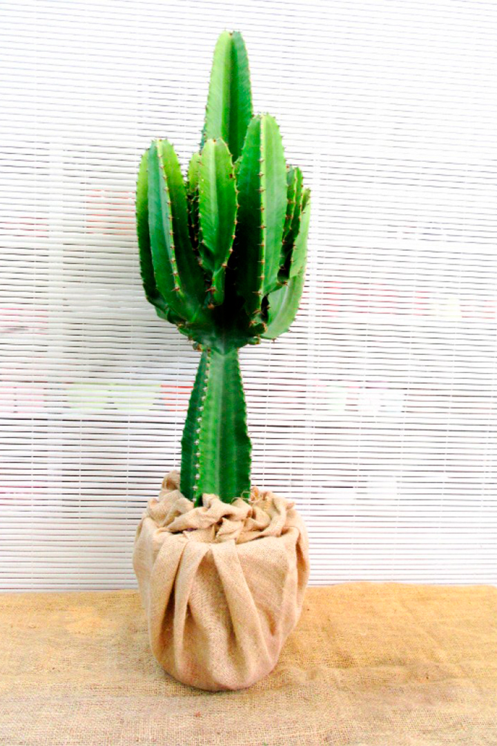 Regalos para recién casados: cactus